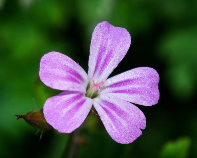 Primo piano di un bel fiore viola