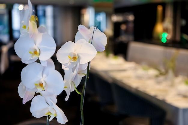 Closeup  of beautiful white orchids in a venue