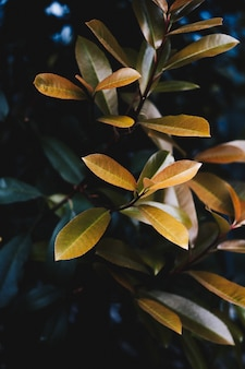 Closeup of beautiful yellow leaves of a plant in a botanical garden