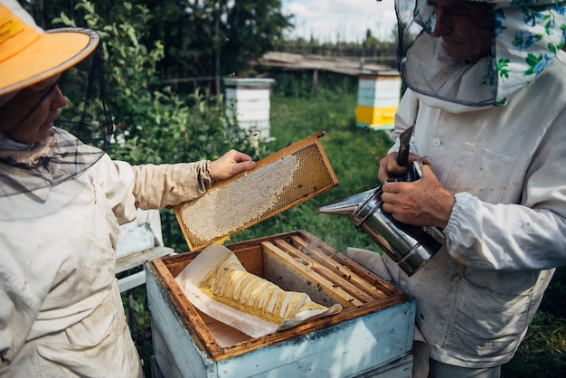 Closeup of beekeeper holding a honeycomb. beekeeper in protective workwear inspecting honeycomb frame at apiary. beekeeping concept. farmer harvesting honey.