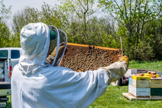 Closeup of beekeeper inspecting brood trays from beehive super
