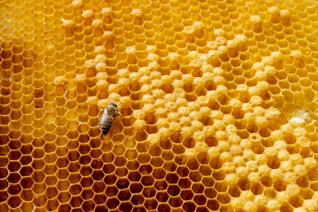 Closeup of bees on honeycomb in apiary. selective focus