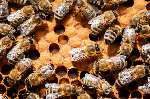 Closeup of bees on the honeycomb in beehive
