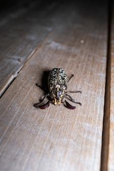 Primo piano di uno scarabeo sul pavimento