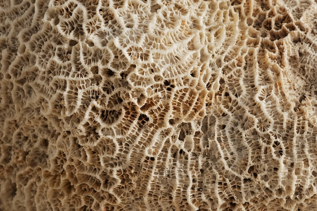 Closeup beige natural coral texture