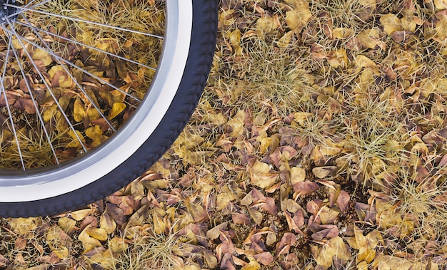 Closeup of a bicycle wheel on autumn leaves