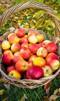 Крупным планом большая плетеная корзина, полная красных яблок