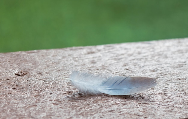 Closeup of bird feather on wooden table with green background