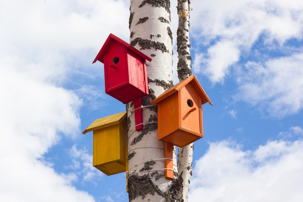 Closeup of birdhouses on a birch tree in the city