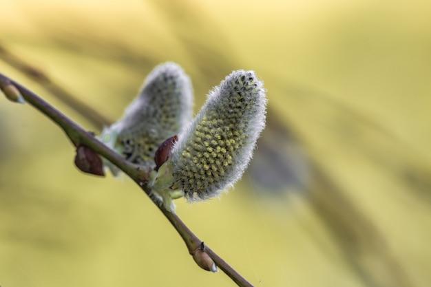 Primo piano della fioritura dei fiori di quercia