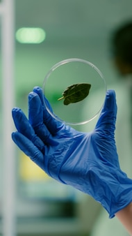 Closeup of botanist researcher holding in hands sample with green leaf