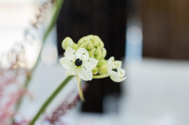 신선한 ornithogalum 꽃의 근접 촬영 지점