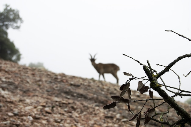 Closeup of a branch with a blurred goat standing on a hill
