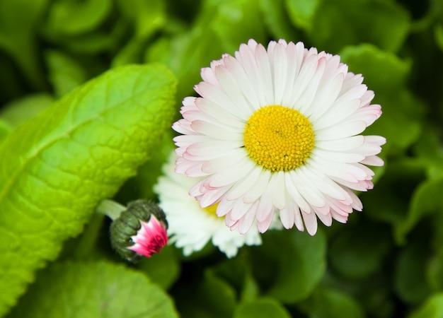 Closeup bright flower, growing in the garden
