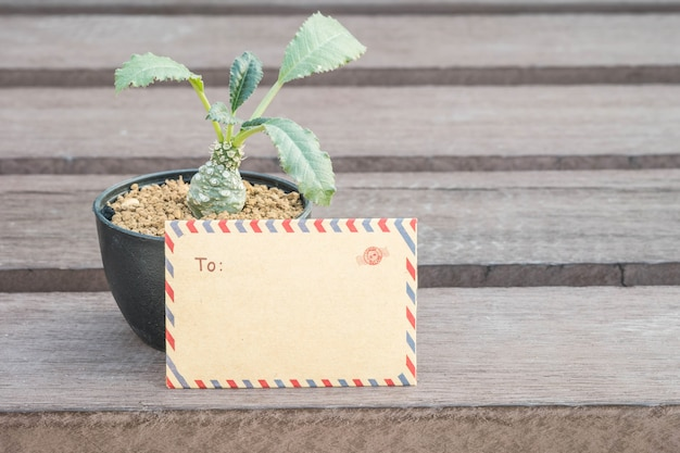Closeup brown envelope with cactus in black pot on blurred wooden chair texture background