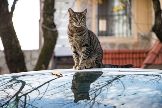 Primo piano di un gatto a strisce marrone seduto su un'auto catturata durante l'autunno