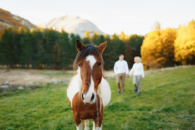 A closeup of a brown and white horse against the backdrop of an autumn forest and a walking couple