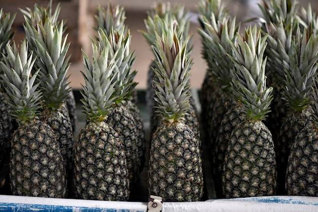 Closeup of bunch of pineapple