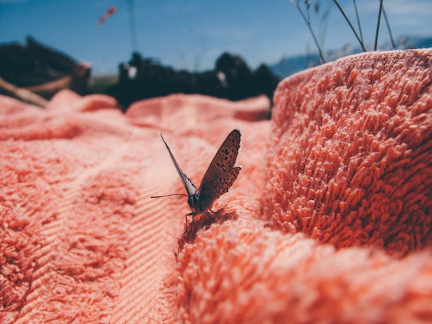 Closeup of a buterfly on a pink towel on a sunny day