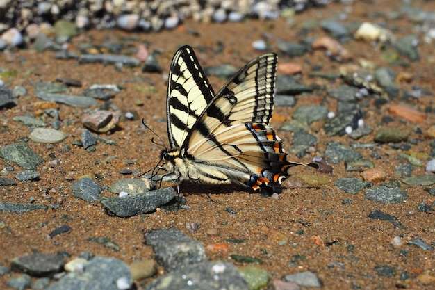 Closeup of a butterfly on the ground during the daytime
