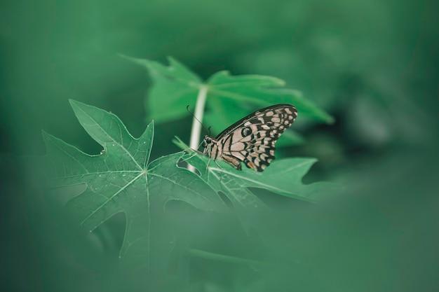 녹색 잎에 근접 촬영 나비입니다.