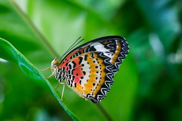 Бабочка крупным планом на цветке