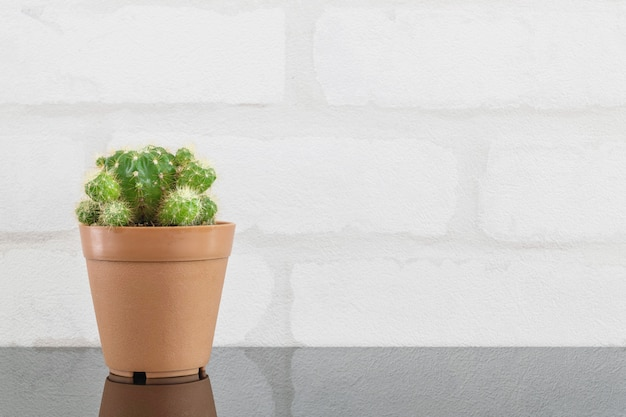 Closeup cactus in brown pot for decorate on table