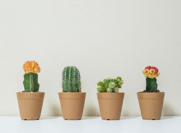 Closeup cactus for decorate on desk