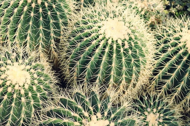 Closeup of cactus plants