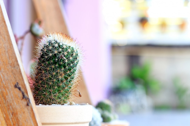 Closeup cactus plants