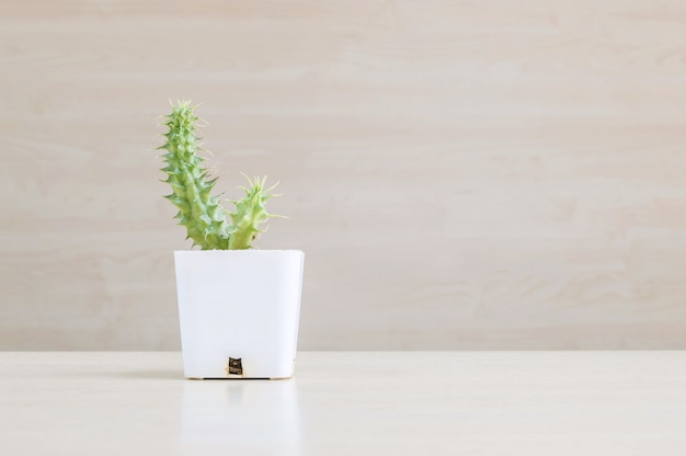 Closeup cactus in white plastic pot on blurred wood desk and wood wall textured background