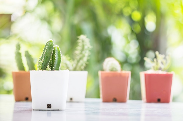 Closeup cactus in white plastic pot on garden view background