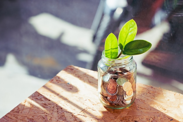 Closeup coins in a glass of bottle with little plant using as financial and money savings concept