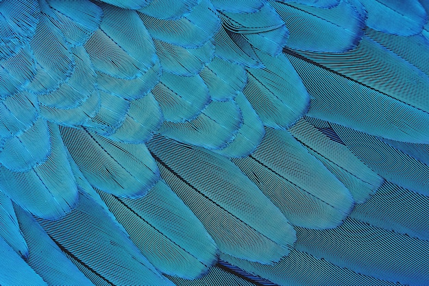 근접 촬영 화려한 파란색 깃털 패턴 럭셔리 패턴
