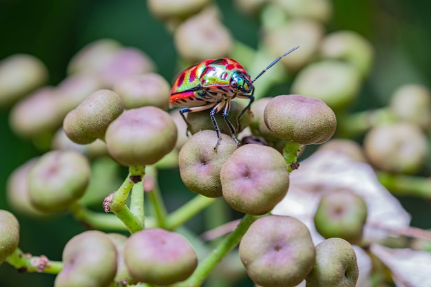 Closeup colorful bug on plant in wildlife nature.