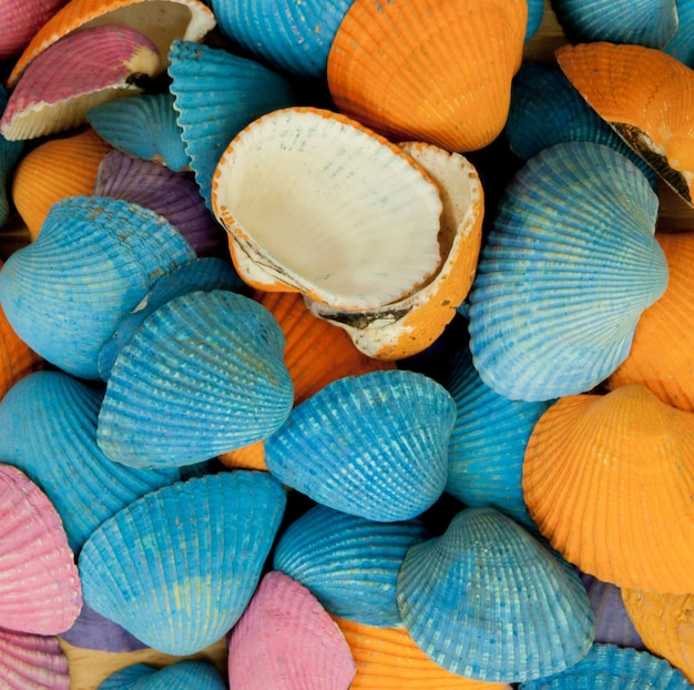 Closeup of colorful sea shells in different shapes.