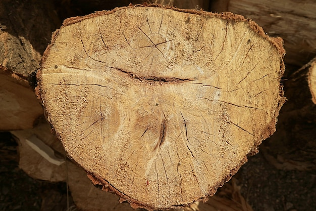 Closeup of the cross section of cut tree trunk