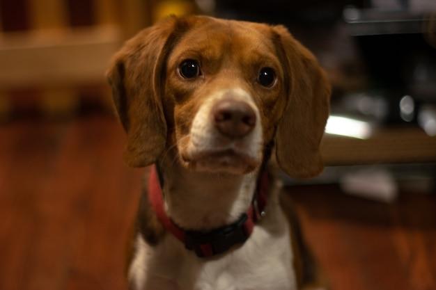 Closeup of a cute domestic dog sitting