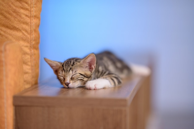 Closeup of a cute domestic kitten sleeping on a wooden shelf with a blurry background