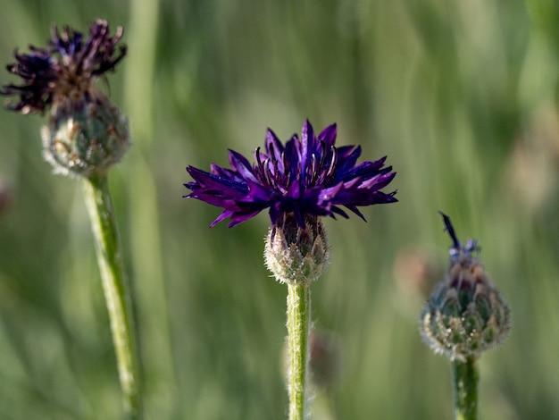 Closeup of a cute flower under the sunlight