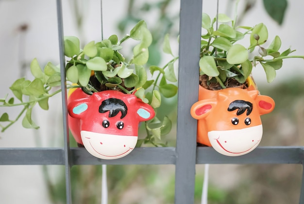 Closeup cute flowerpot in cow shape hang at iron fence background