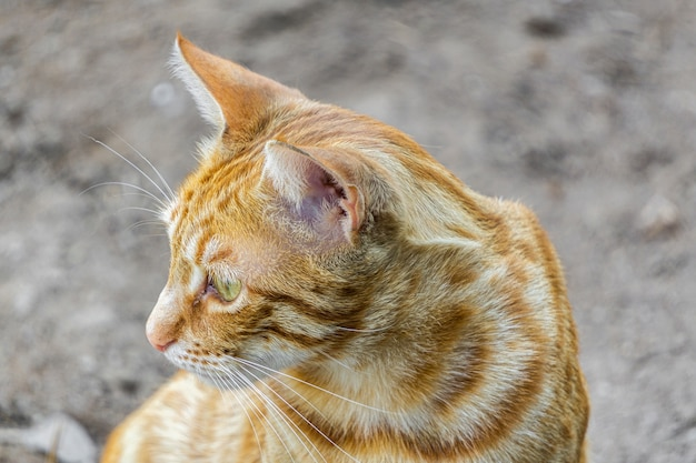 Closeup of a cute ginger cat under the sunlight with a blurry scene