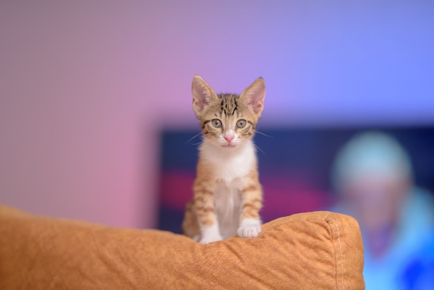 Closeup of a cute ginger kitten on a couch under the lights with a blurry background
