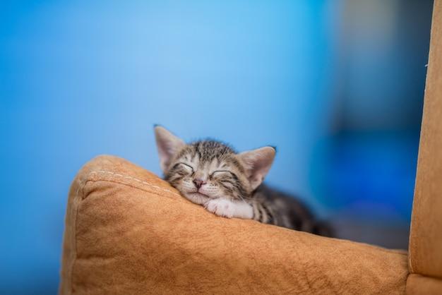 Closeup of a cute kitten resting on a sofa