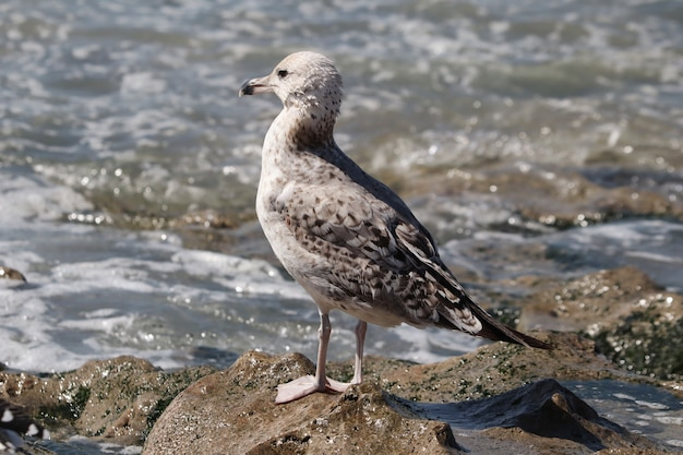 Closeup of a cute seagull on a rocky shore under the sunlight