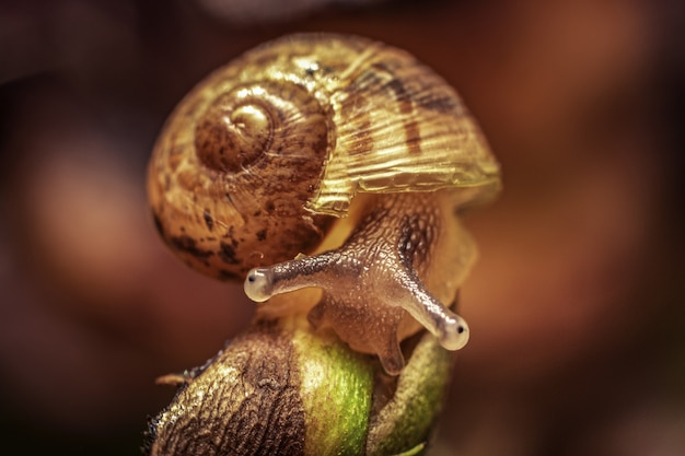 Closeup of a cute snail on a red background