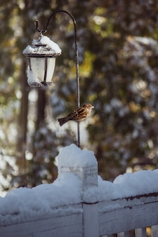 Closeup of a cute sparrow on a winter day