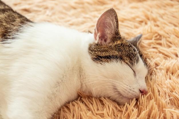 Closeup of a cute tabby cat sleeping on a sofa.