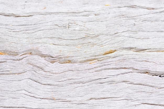 Closeup of dead wood trunk natural texture surface