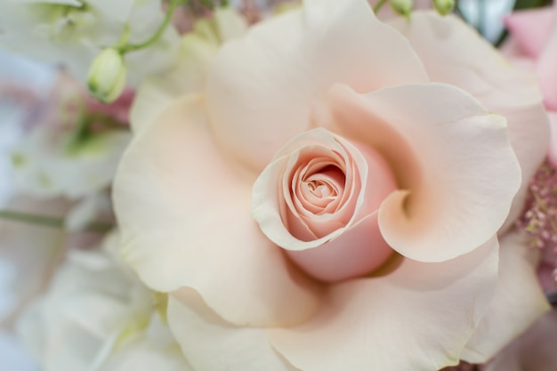 Closeup delicate bud of fresh pink rose with unfolded petals. event decoration with fresh flowers